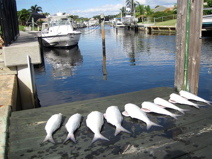 Img 1363 copy for Jupiter florida fishing report